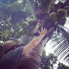 It took a few times but he finally made it to the top...now it's time for some fresh Pina Colada's . . . . . . . . #photo #instaphoto #photograph #coconut #fresh #happyhour #cocktails #pinacolada #drinks #lmao #hilarious #justkidding #inspo #inspiration #fall #vaca #vacation #kohsamui #island #thailand #asia #travel #instatravel #wander #wanderlust #travelblogger #itinerary #lmbvtravels