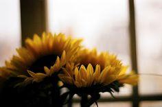 love sunflowers <3