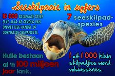 Afrikaanse taakhulp: Seeskilpaaie. Syfers. Feite. Diere. Animals. Hoezit! Afrikaans, Homeschool, Van, Classroom, Teacher, Activities, Education, Learning, Words