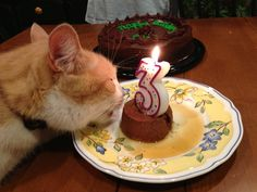Bird, the Birthday Cat turns 3!