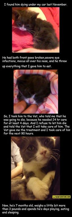 ...and I bet that cat considers the human an angel without fur. D'Awwww...