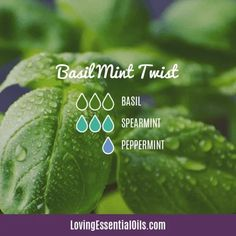 Spearmint Essential Oil Diffuser Recipes by Loving Essential Oils | Basil Mint Twist with basil, spearmint, and peppermint Essential Oil Diffuser Blends, Doterra Diffuser, Doterra Oils, Hangover Essential Oils, Mint Oil, Spearmint Essential Oil, Diffuser Recipes, Young Living Essential Oils, Positive Outlook On Life