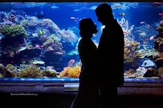 intimate moment infront of the natural reef of Long Island Aquarium ##nycphotography #newyork #nyc #raymondhamlinphotography #lifestylephotography #brooklyn #manhatten #portrait #wedding #weddingphotography #bride #groom #riverheadaquarium #riverhead