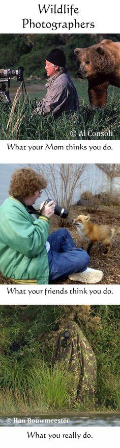 Wildlife Photographers ~ #humor #photography