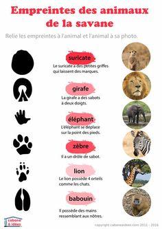 Chaque fois que l'on va se promener en forêt, nous essayons de trouver des traces d'animaux, des empreintes laissées dans la boue ou la terre humide. Ce n'est pas chose aisée et à défaut, j'ai préparé pour les enfants des fiches pour reconnaître les empreintes des animaux et en particulier des mammifères. Si il est facile de différencier une empreinte d'oiseau d'une empreinte de mammifère, il est super complexe de faire la différence entre une empreinte de renard et une e...