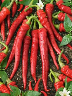 Natural Home Remedies, Cayenne