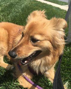 #dogsofinstagram #dog #vdog #rescue