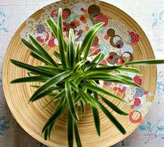 DIY scrap paper bowl via @modpodgerocks