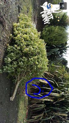 Tree fell down:(