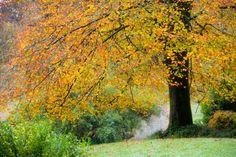 ***Fall colours (Dartington Gardens, England) by XFI