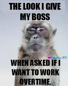 The look I give my boss when asked if I want to work overtime. Nurse humor. Nursing humor. Meme. Monkey meme. Work problems. Working problems. Overtime sucks. Over it.