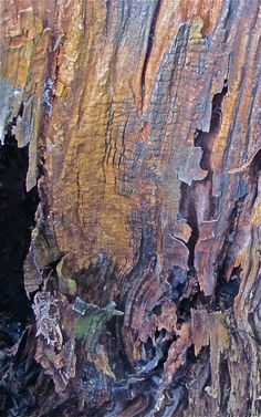 Photo: Åse Margrethe Hansen (Norwegian, b. Art Texture, Tactile Texture, Visual Texture, Patterns In Nature, Textures Patterns, Photoshop, Tree Art, Natural Texture, Macro Photography