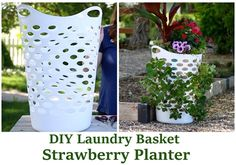 DIY Laundry Basket Strawberry Planter - one of the easiest ways to grow your own strawberries at home... #gardening #homesteading