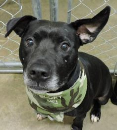 7 / 30 - Petango.com – Meet Jake, a 3 years 3 months Terrier, American Pit Bull / Mix available for adoption in ANDERSON, IN Address  613 Dewey Street, ANDERSON, IN, 46016  Phone  (765) 356-0900  Website  http://www.petango.com/shelter s/1058  Email  kwilson1236@gmail.com.com