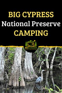 A National Preserve is different from a National Park. Regulations prevent any activity from jeopardizing the natural resources of the land. Big Cypress National Preserve maintains the beauty of it's wildlife and nature landscape. For great tips and information on visiting, camping and exploring Big Cypress, check out this article! #rvblogger #bigcypressnationalpreserve #nationalpreserves #everglades #floridacamping #bigcypresscamping #rvdestination #nationalparks #rvtips #campingtips