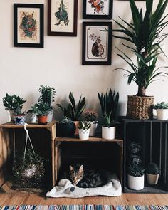"""5,359 Likes, 28 Comments - 。 S a b s i 。 (@katzenkiind) on Instagram: """" 。 Home is where my cats are #vsco #home #roomdecor #plants #interiordesign #catsofinstagram"""""""