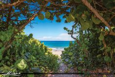 Bluewater Beach View Through Seagrape Trees Jupiter Florida Jupiter Beach Florida, Buy Images, Florida Travel, Park, Plants, Photography, Beautiful, Trees, Parks