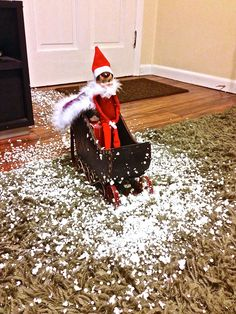 Arrival of Elf on the Shelf