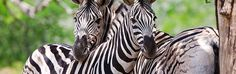 The Serengeti Resort • Boerne, TX