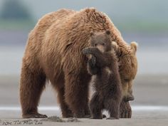 Tin Man Photography  Need something to cheer up? Katmai National Park, Alaska.