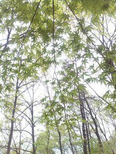 하늘 향해 손 벌린 잎.^^