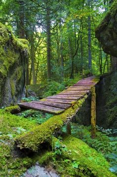 I like this bridge because it's old and supported by moss covered logs so it looks like they board we would walk on have been changed before.
