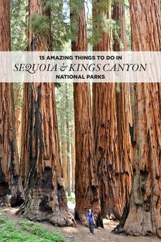 15 Amazing Things to Do in Sequoia National Park + Kings Canyon National Park are home to the largest trees in the world // localadventurer.com