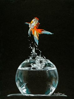"Favorites ‹ National Art Gallery ""Koi"" color pencils on black paper. By Tammy Ikram TammyArtist.com"