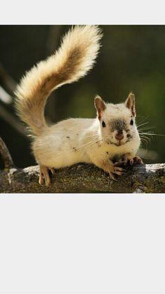 Such a Pretty Little Squirrel. :)
