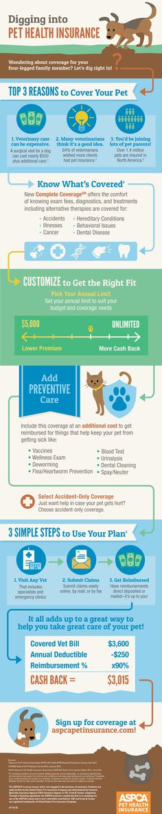 Digging into Pet Health Insurance Are you wondering about pet insurance? Digging into Pet Health Insurance Are . Pet Health Insurance, Health Insurance Coverage, Best Pet Insurance, Cat Care Tips, Dog Care, Kitten Care, Healthy Pets, Dog Training Tips, Pet Dogs