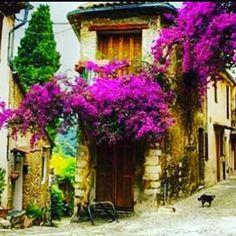 Un mix di antiche strade piante rampicanti e l'inverno.  TuscanyPeople.com People and Stories of Tuscany complete guide to TuscanyLifestyle. ...  ...  ...  #Tuscany #Toscana #TuscanyPeople #MadeinTuscany #ILoveTuscany #MadeinItaly #LifeStyle #TuscanyWine #TuscanyLifestyle #InstaTuscany #InstaToscana  #TuscanyGram #TuscanyExperience #Toskana  #TuscanyStyle #IgerToscana #IgerItalia #Italy #Italia #Art #Arte #SolocoseBelle #ItaliansDoItBetter #TravelBlogger #italia365  #Repost @aninhamaianobre…