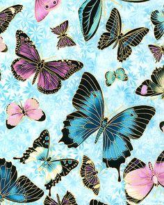 Under the Australian Sun 2- Bold Butterflies-Sky/Gold