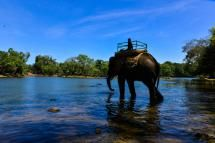 Elephant at Dubare. - Paddy Photography/Getty Images