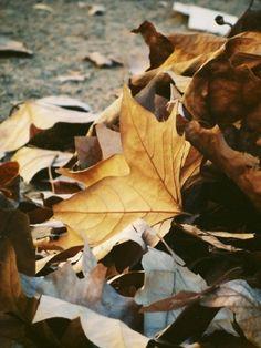 Autumn  #givesaks #Saks