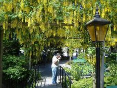 6 Amazingly Beautiful Gardens Around The World Garden Entrance, Garden Gates, Most Beautiful Gardens, Beautiful Places, Wooden Garden Gate, Flora Garden, Garden Park, Flowering Trees, Gardening For Beginners