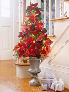 Poinsettias in garden urn (tomato cage with lights and then wrapped with greenery and florals. Pretty!