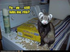 just another day with ferrets :) <3