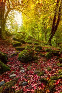 Fall by Cuma Çevik on 500px