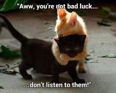 Aww! My grandmother always said that in Italy black cats are good luck! :)