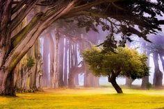 a hidden treasure in San Francisco...