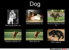 Dog... - What people think I do, what I really do - Perception Vs Fact
