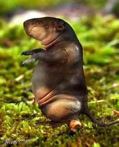 'Extinct Animals - Open photoshop contest is now closed. Interesting Animals, Unusual Animals, Rare Animals, Safari Animals, Ugly Animals, Weird Creatures, Sea Creatures, Types Of Animals, Extinct Animals