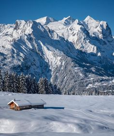 "- david birri / switzerland (@davidbirri) on Instagram: ""#winterwonderland #hasliberg #haslital #wetterhorn #berneroberland #jungfrauregion #swissalps…"""