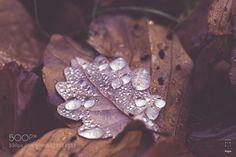 Like diamonds by AndrewBiz