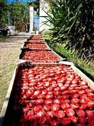 Sun drying tomatoes - the garden's bounty. Preserving Food, Other Recipes, Farmers Market, Preserves, Pickles, Fresh, Canning, Vegetables, Healthy