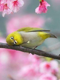 beautiful birds, like animals, animals images Funny Birds, Cute Birds, Pretty Birds, All Birds, Little Birds, Exotic Birds, Colorful Birds, Beautiful Creatures, Animals Beautiful