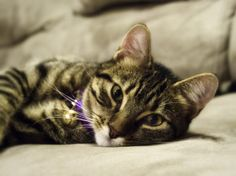5 Ways Your Cat Proves Their Love To You