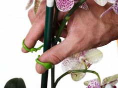 The Ultimate Plant Clips can be used to fix plant stems with one hand by simply holding their curved ends with thumb and index finger and pressing them together.