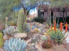 1000 images about desert landscaping on pinterest for Garden design las vegas