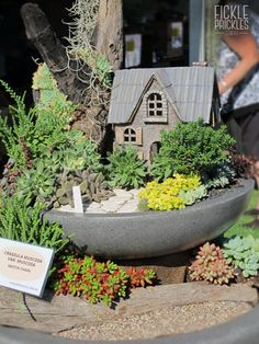 Succulent fountain display. Perth, Fountain, Succulents, Chips, Container, Display, 3d, Amazing, Garden